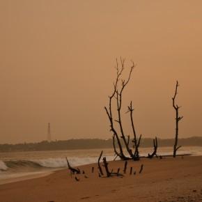 Příroda na Srí Lance (1)