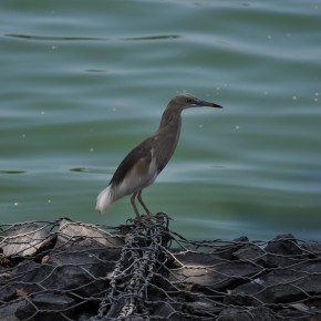 Příroda na Srí Lance (12)