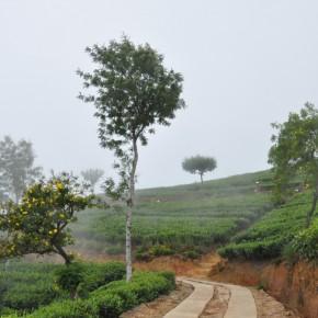 Příroda na Srí Lance (13)