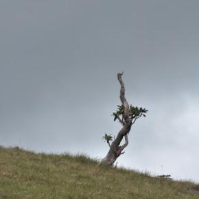 Příroda na Srí Lance (15)