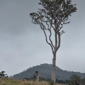 Příroda na Srí Lance (16)