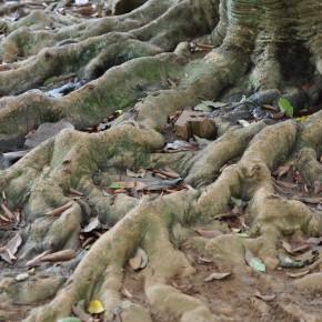 Příroda na Srí Lance (18)