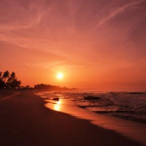 Příroda na Srí Lance (2)