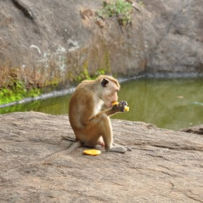 Příroda na Srí Lance (28)