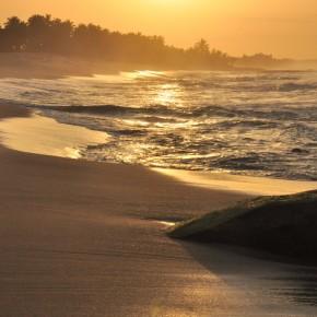 Příroda na Srí Lance (4)