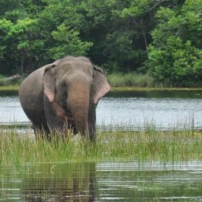 Příroda na Srí Lance (40)