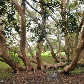 Příroda na Srí Lance (42)