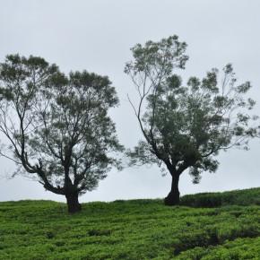 Příroda na Srí Lance (46)