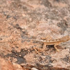 Příroda na Srí Lance (48)