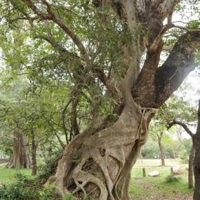 Příroda na Srí Lance (54)