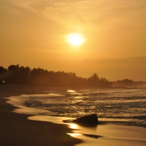 Příroda na Srí Lance (57)
