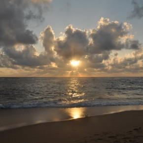Příroda na Srí Lance (58)