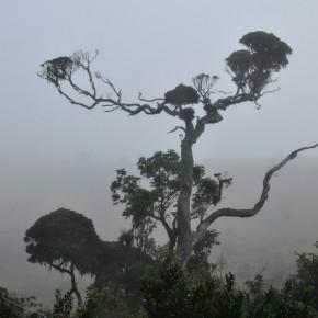 Příroda na Srí Lance (6)