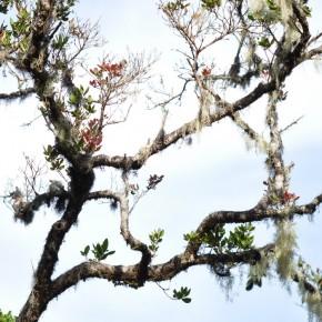 Příroda na Srí Lance (9)