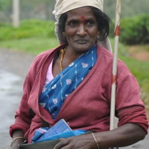 Srílančané (30)