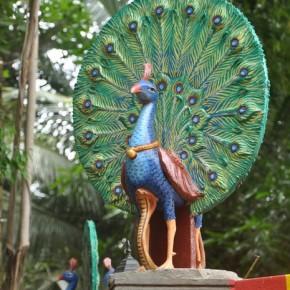 Srílanské svatostánky (36)