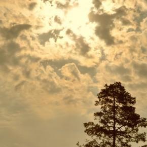 Středočeské stromy (5)