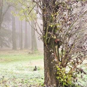 Středočeské stromy (6)
