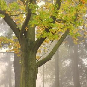 Středočeské stromy (7)