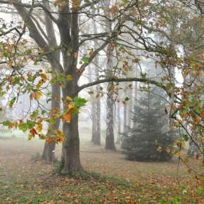 Středočeské stromy (9)