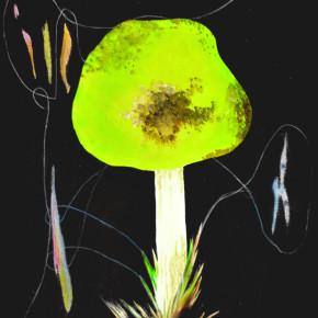 První houbička