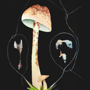 Třetí houbička