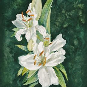 Královna lilie II