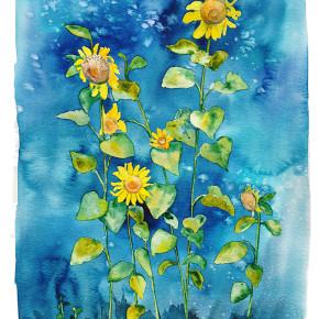 Slunečnice z Maso Naranch
