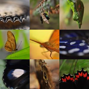 Motýlí dům podruhé