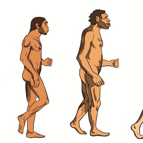 Druhy rodu Homo