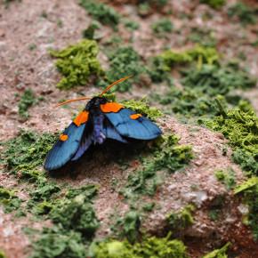 Motýlí dům I