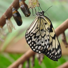 Motýlí dům III