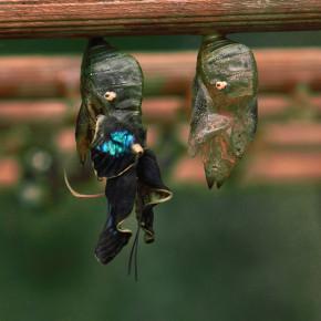 Motýlí dům IX
