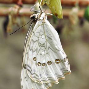 Motýlí dům VII