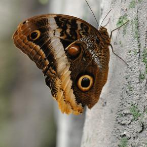 Motýlí dům VIII